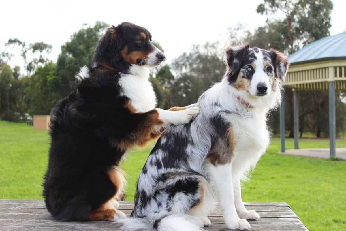 massage-hunde